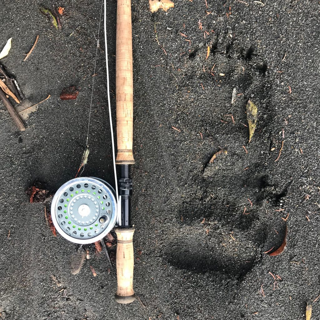 Grizzley bear footprints next to spey rod