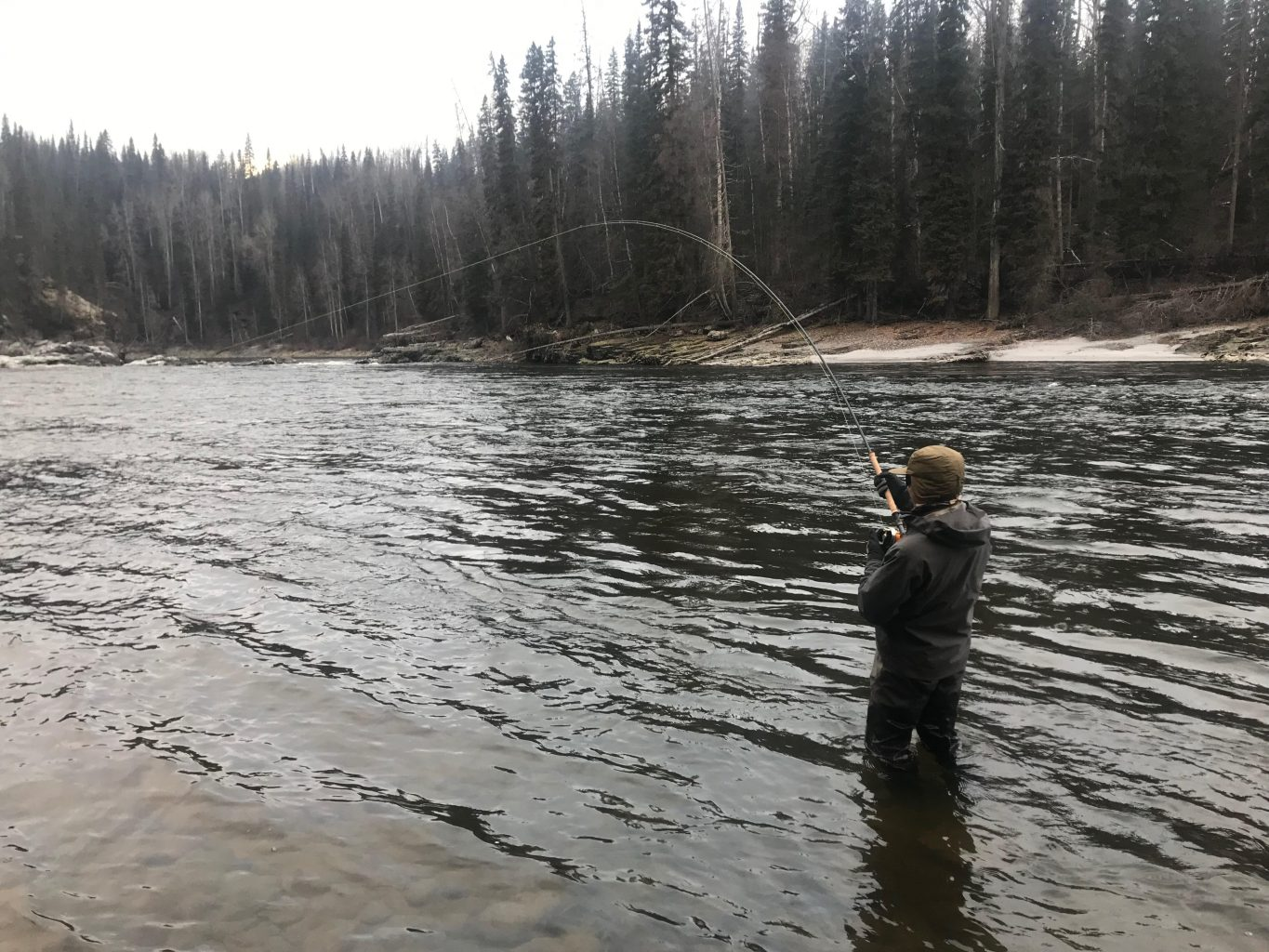 Hooked up with a screaming steelhead on the Upper Skeena River